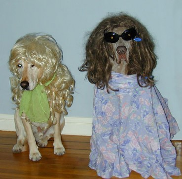 Hunde, süss sauer… witzige Hundevideos