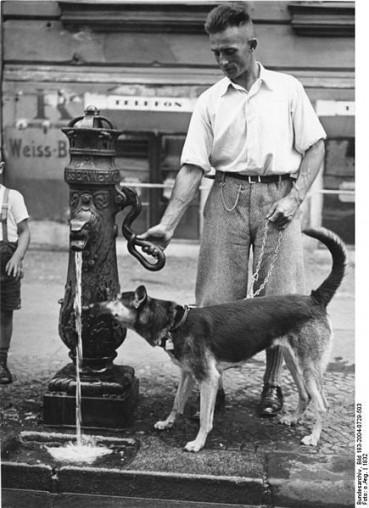 Hund und Herrchen – ein untrennbares Paar