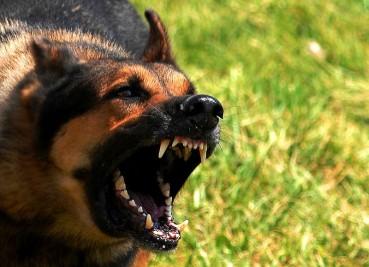 Hunde, die bellen… Alles zum Hunde Biss