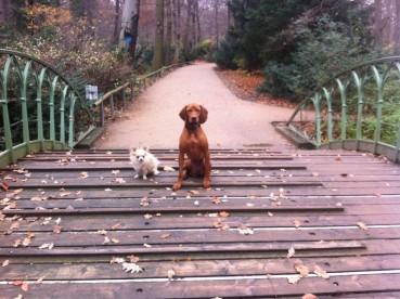 Tipps für die Hundesuche – Welcher Hund passt zu mir?