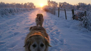 Hunde bei Kälte