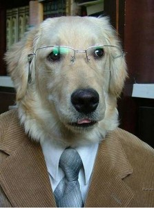 Hund im Anzug