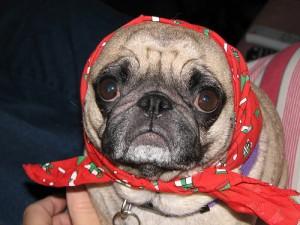 Hunde News - Hunde und Senioren