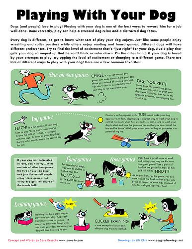 Spiele mit Hund