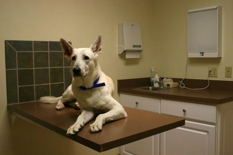 Hunde App: der große Test – Vetfinder vs Tierklinik