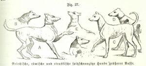 Eine Geschichte der Hunde