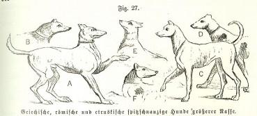 Eine kleine Geschichte der Hunde, oder: Der Hund wird als Nudist geboren