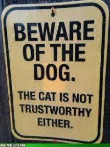 Hund oder Katze ist dann eigentlich auch egal