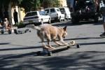 Hund auf Skateboard - noch eine Stufe zum Dogboarding