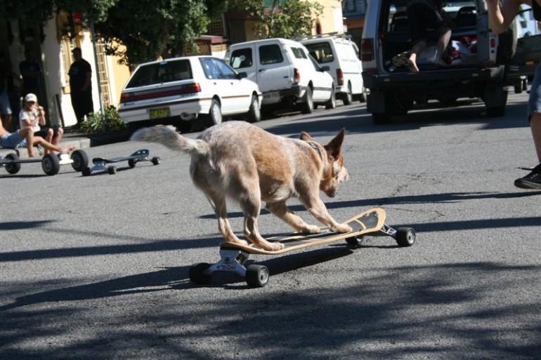 Dogboarding – Hunde auf Skateboards 2.0
