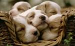 eine Handvoll süßer Hunde
