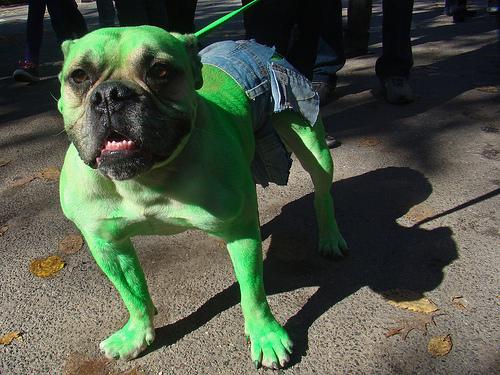 Hulk Hund