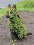 Kennel Hill dog