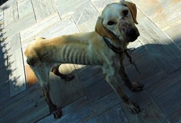 Der Hundegnadenhof: eine traurig-schöne Einrichtung