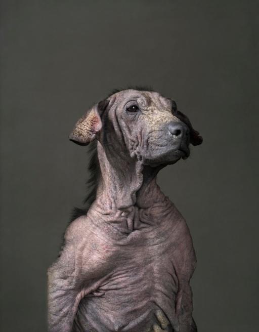 Den Hund einschläfern - von Krankheit und Alter gezeichnet und dennoch voller Stolz