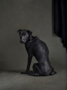 Den Hund einschläfern - man fragt sich, was ist richtig und was ist falsch?