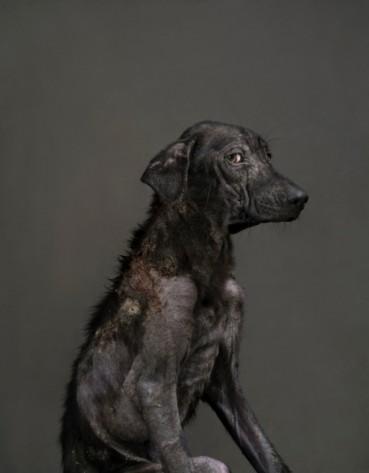 Hund einschläfern? Magische Hundebilder von Yun-Fei Tou