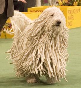 Bild mit Hund bei der Westminster Dog Show