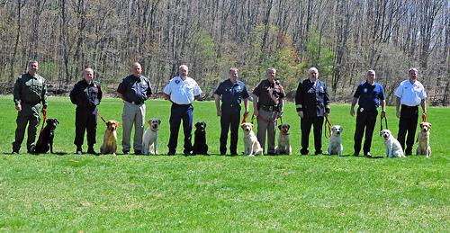 Hundetrainer werden – gewusst wie