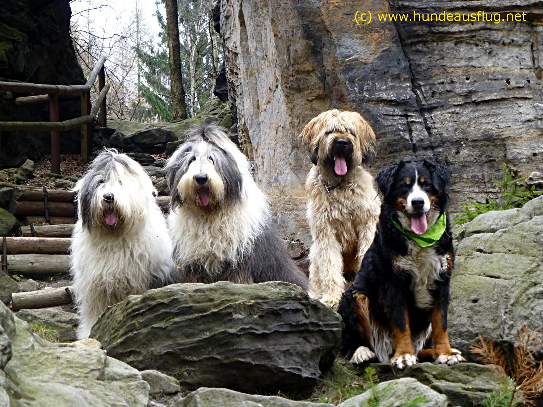 Wandern mit Hund - Elbsandsteingebirge