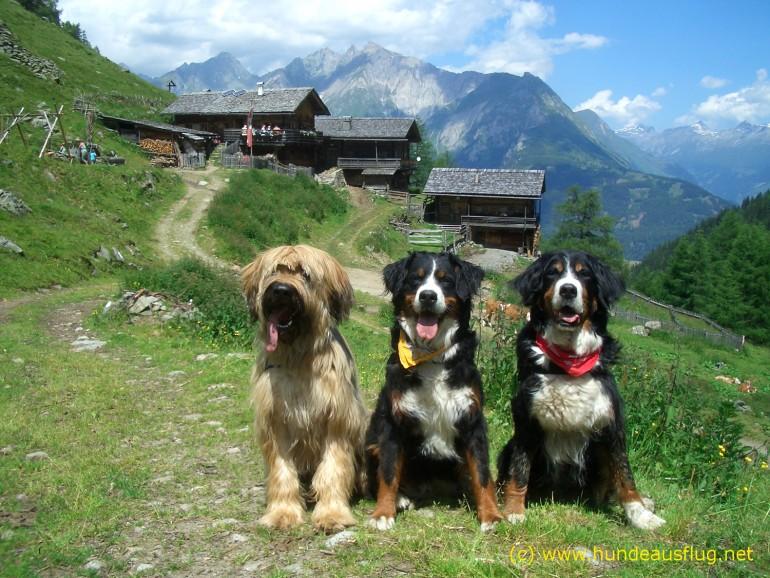 Zurück zur Natur! Wandern mit Hund