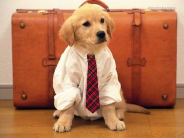 Wir lieben Hunde… (süße Hunde Videos)