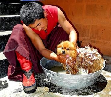 Hundepflege – Bauch, Beine, Po