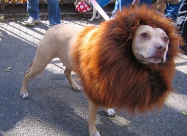 Eine Ironie des Schicksals – Hunde Kostüm