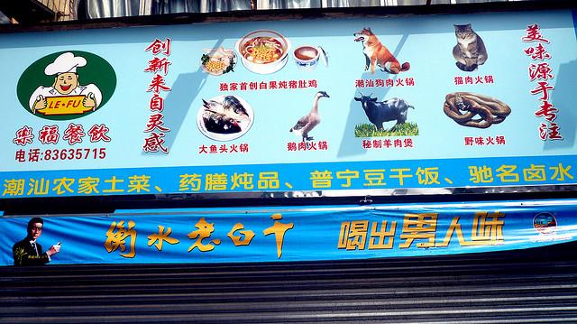 Hunde in China - eine Delikatesse