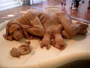 hässlicher Hund