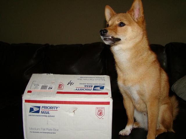 Hunde Geschenke