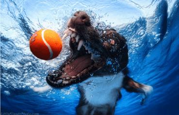 Hunde unter Wasser – die unglaublichen Fotos von Seth Casteel