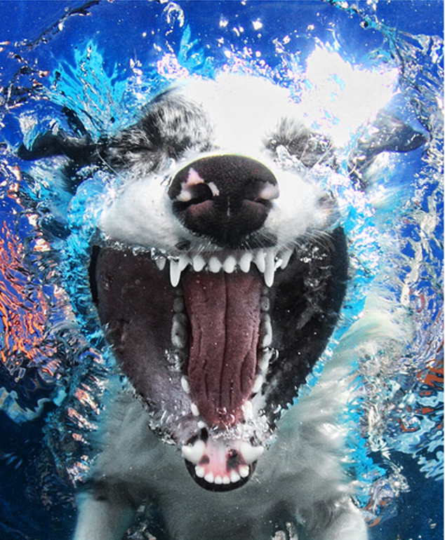 Hunde unter Wasser / Underwater Dogs