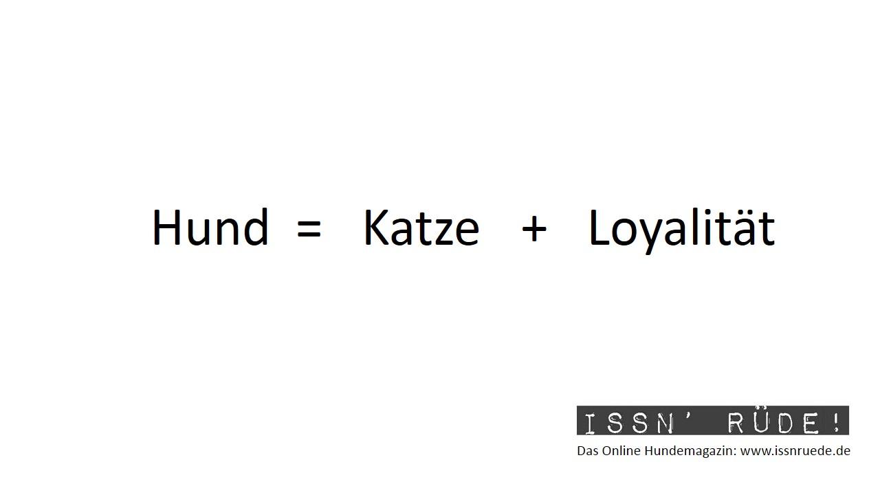 Infografik Hund Katze Loyalität