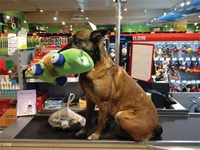 Ich rette belgische Schäferhunde