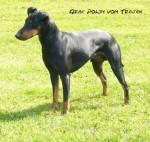Graf Poldy vom Trajan - Manchester Terrier