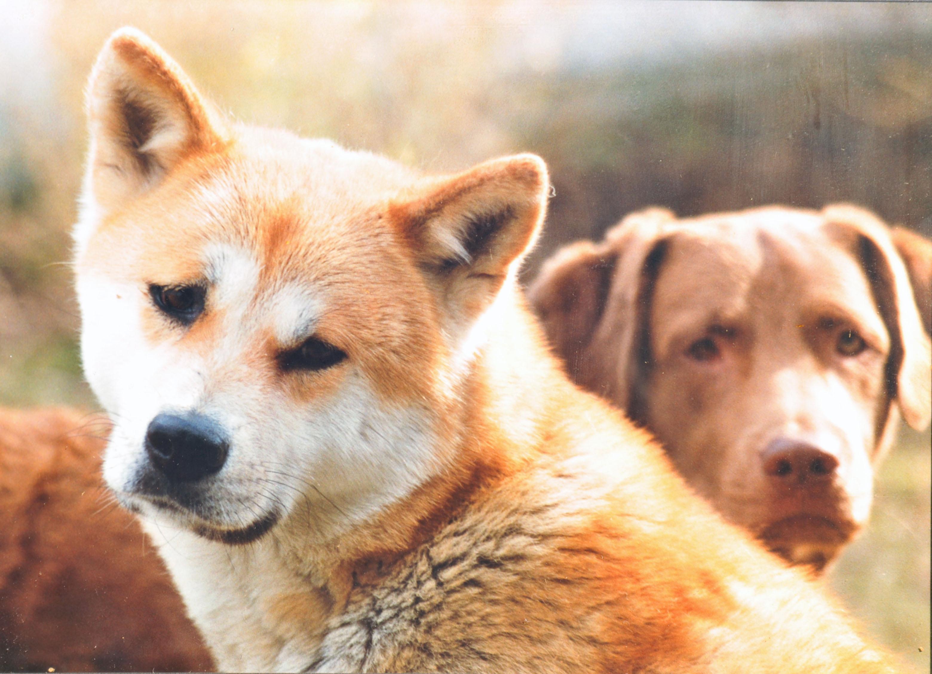 Hundetod