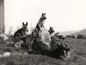 Gedenkstein für ein Hundeleben