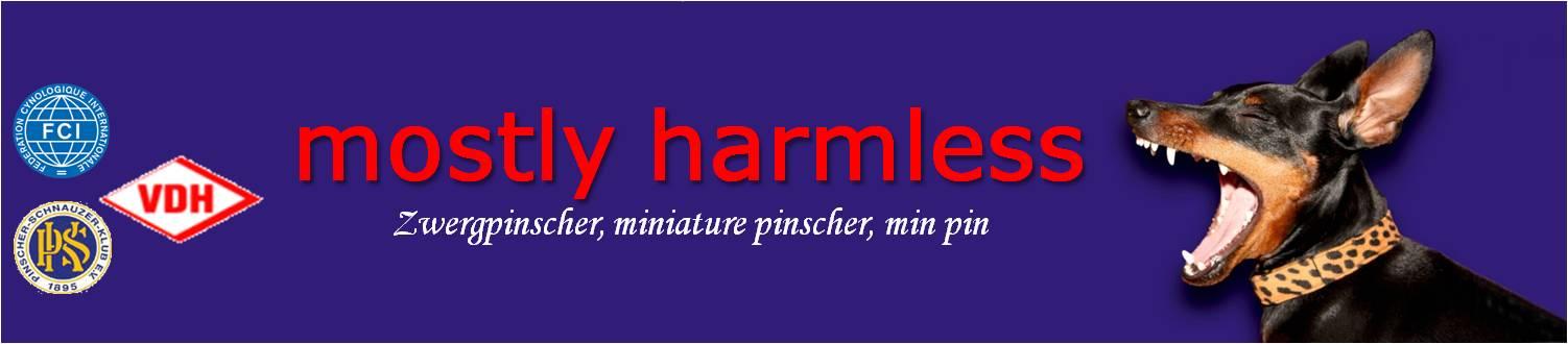 mostly harmless Zwergpinscher