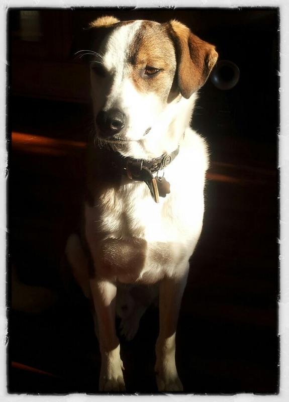 Relik, ein russischer Hund aus dem Tierheim Bergheim