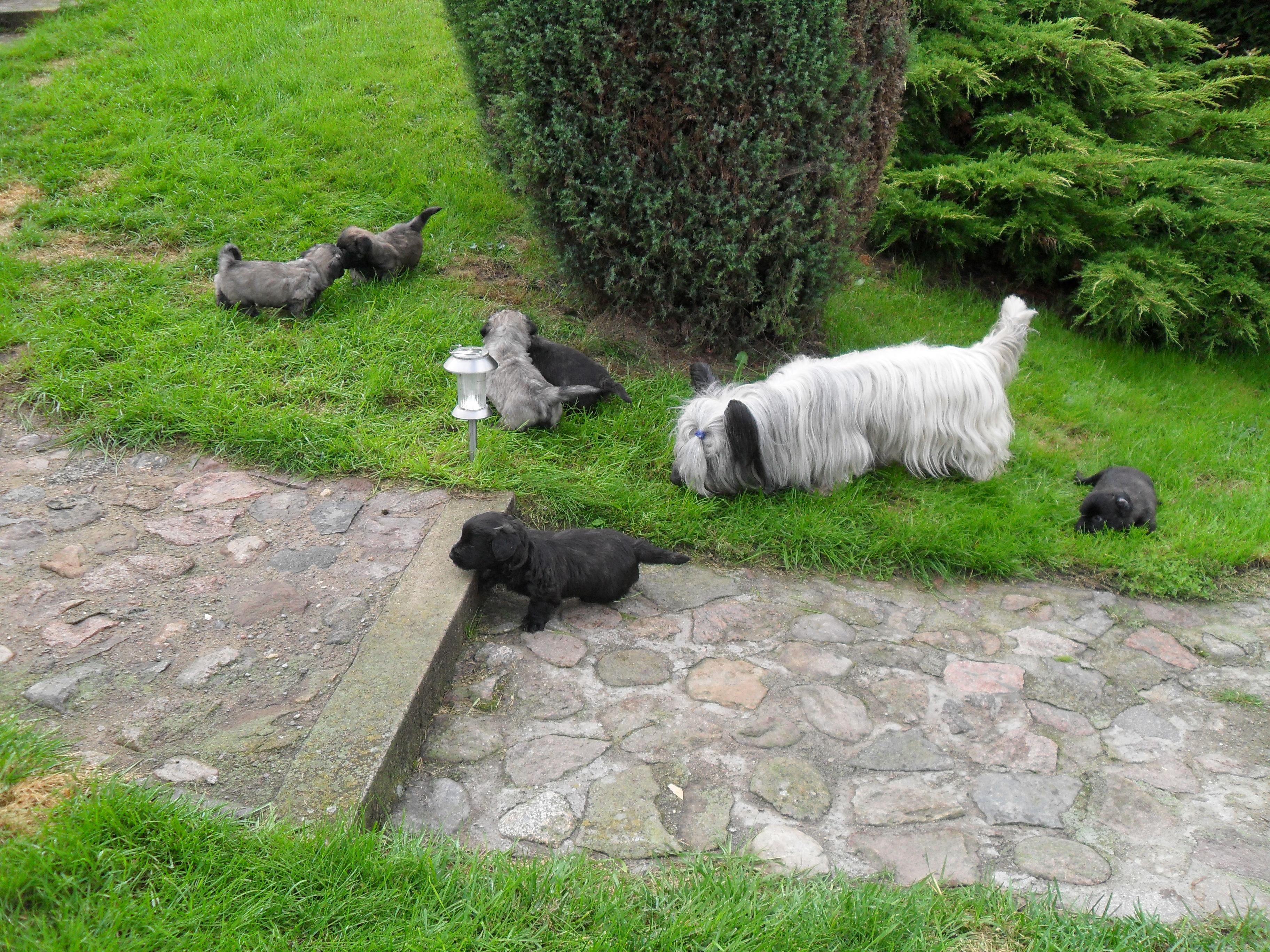 Schnüffeln in fremden Gärten