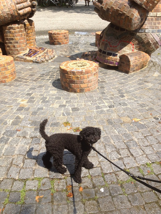 Tino, der kleine Sorgenhund