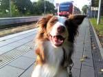 01 Hund Mailaka am Bahnhof