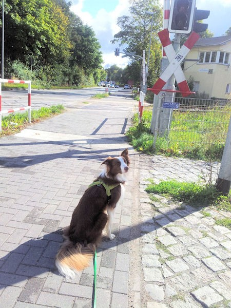 Hund Mailaka sitzt vor der Schranke