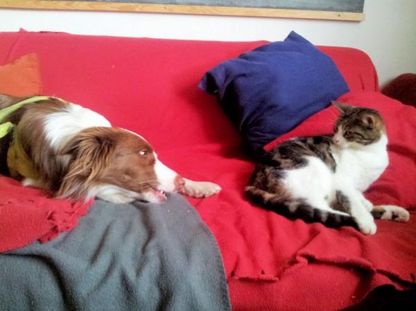 Hund Mailaka spielt mit Katze auf dem Sofa