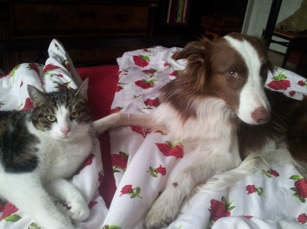 Hund Mailaka einträchtig mit Katze