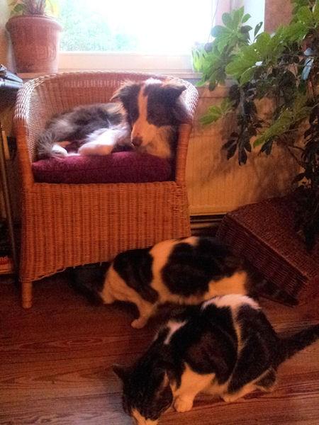Hund Mailaka auf dem Stuhl