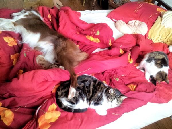 Hund Mailaka mit Katzen im Bett