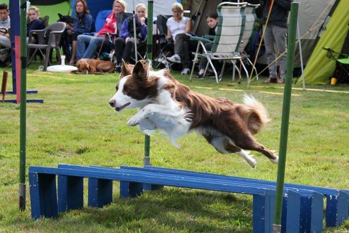 Hund Mailaka beim Agilitytraining