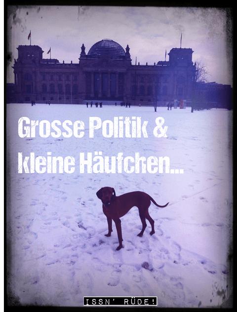 Hunde in die Politik!